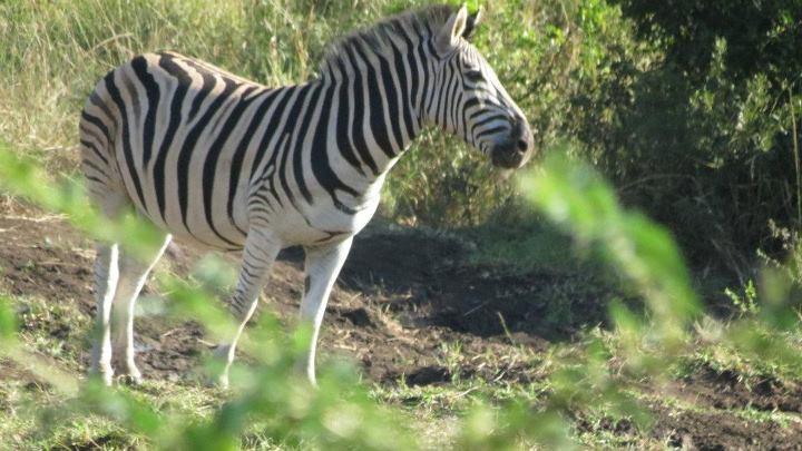 South Africa- Izweimilingo