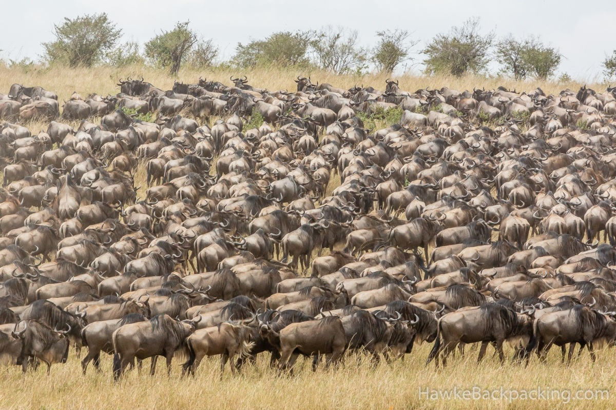 Do not be a Wildebeest! Cost vs benefit-$$